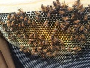 Beekeeping: Moving Frame(s) of Capped Brood to a Weak Hive 2