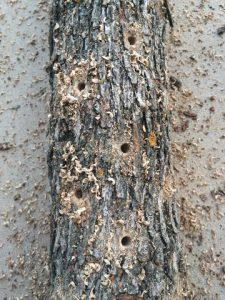 Mushroom log drilled