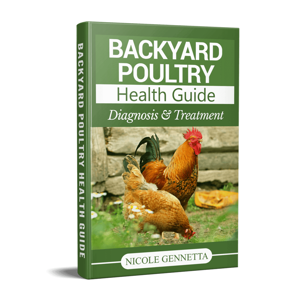 What To Do When You Have A Sick Chicken 2