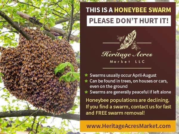 FREE Honey Bee Swarm Removal 13