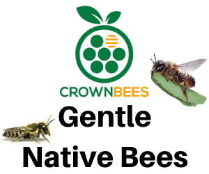 Native Bees ft. Crown Bees 1
