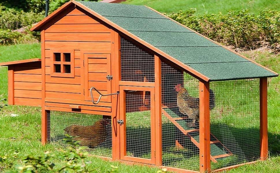 Everything You Wanted To Know About Raising Chickens 7