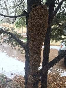 FREE Honey Bee Swarm Removal 20