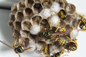 FREE Honey Bee Swarm Removal 23