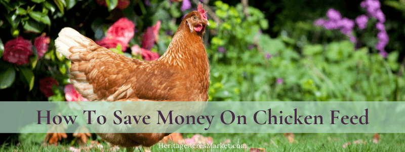 How To Save Money On Chicken Feed 1