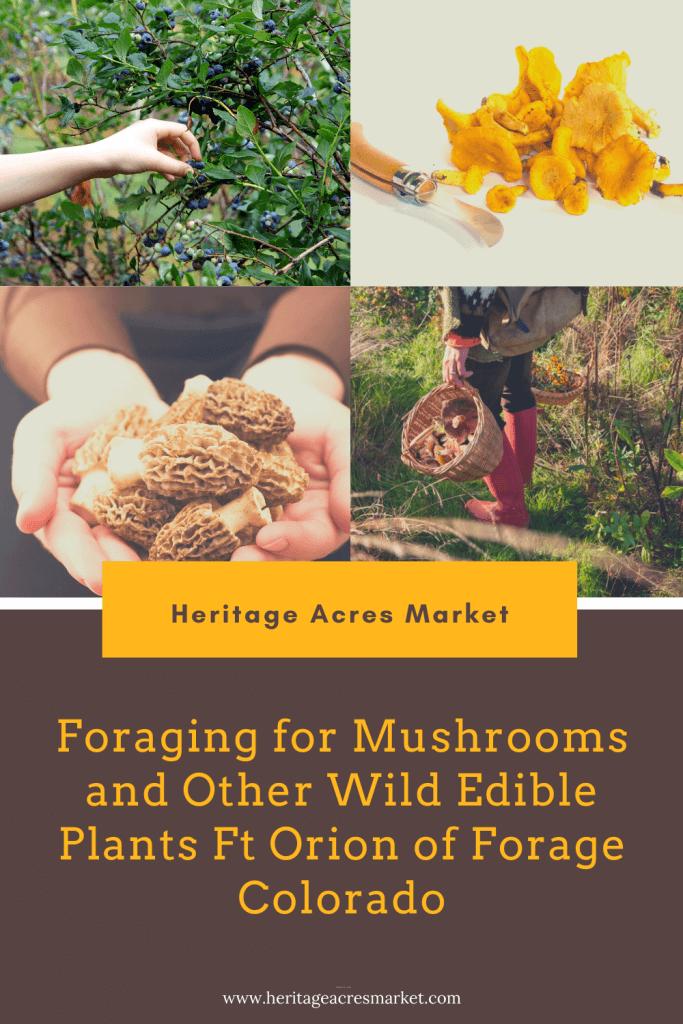 Collage of wild mushrooms