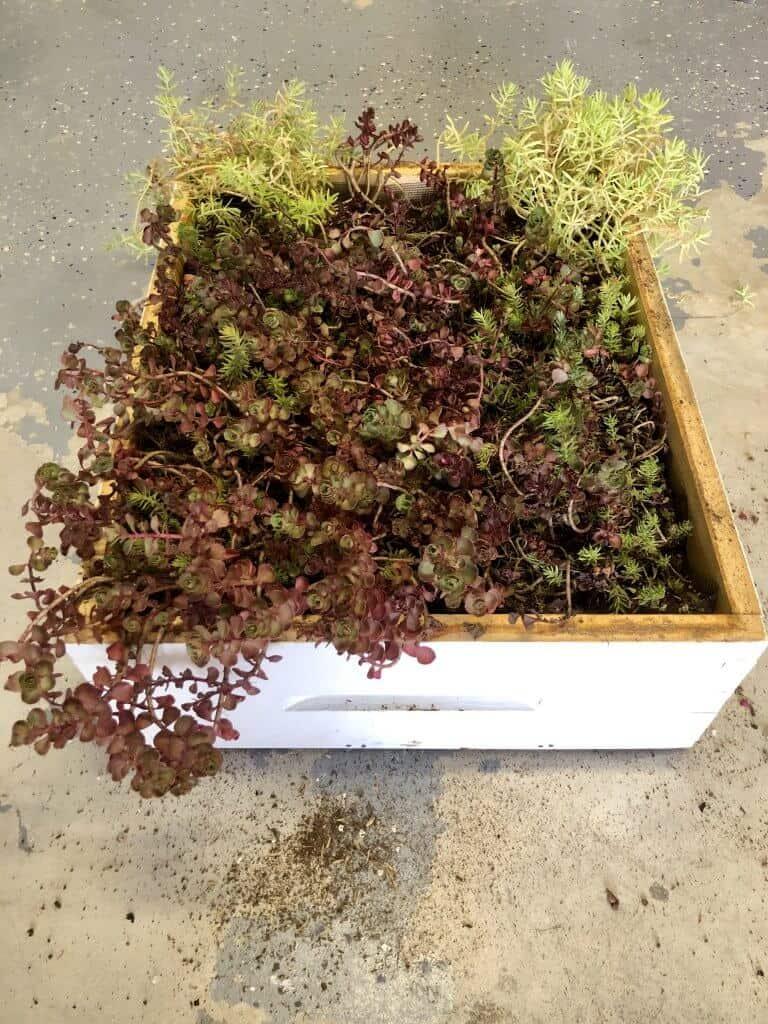 DIY Bee Hive Green Roof 25