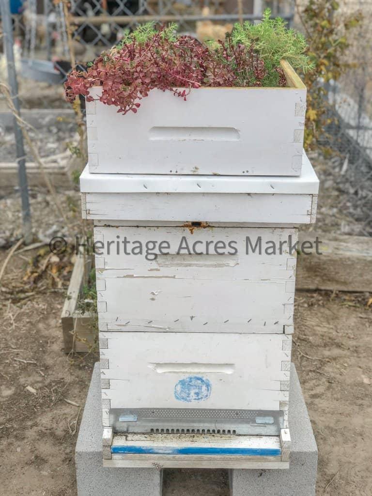 DIY Bee Hive Green Roof 28