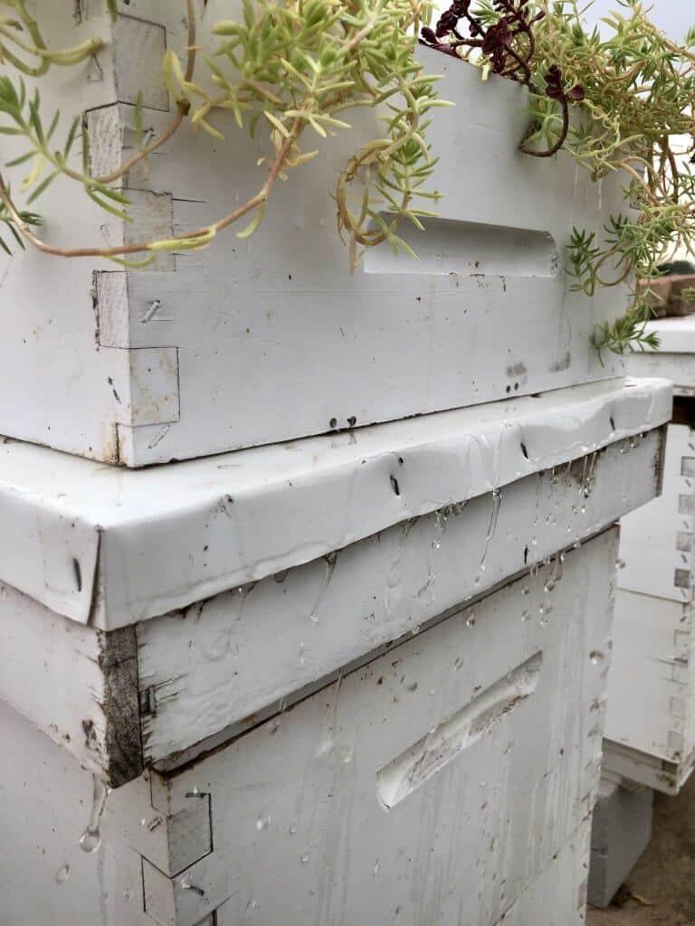 DIY Bee Hive Green Roof 27